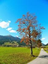 Autumnal walk on Moosweg