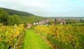 Views down the vines