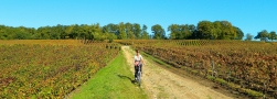 Cycling the sentier de vin