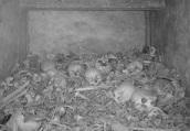 The bones of WW1 soldiers