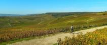 The sentier de vin