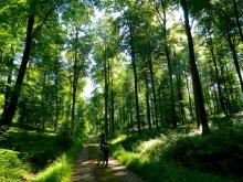 Cycling around Lyons-la-Forêt