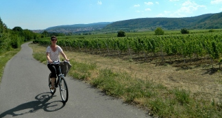Cycling along the Wein Strasse