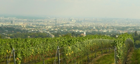 Vienna from Grinzig vineyard
