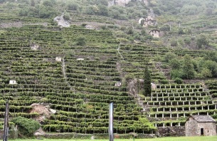 Aosta terraced vineyards