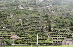 Aosta terraced vineyards
