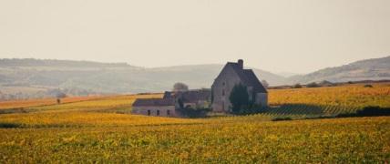 Autumn on the Golden Hillside