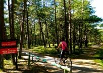 Cycling in Słowiński National Park