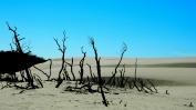Łącka dune
