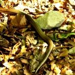 Slumbering lake snake
