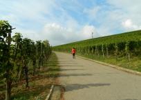 Ebringen vinyards