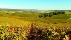 Mutigny vines basin