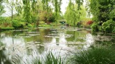 The waterlilly pond