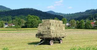 A Slovenian summer
