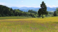Wild Slovakia