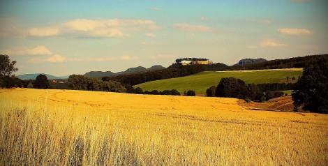 Königstein across the fields