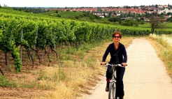 On the trail to wine