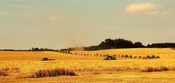 Summer harvesting