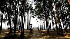 Coastal forest at Karkle