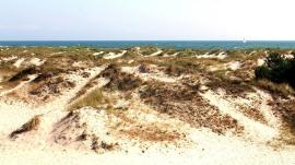 Sandhammaren dunes