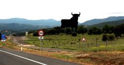 Roadside Osborne bull