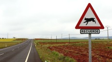 Roadsigns warns of lynxes