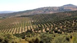 Olive Groves of Sierra Subbetica