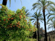 Orange trees and palm trees at the Alcazar