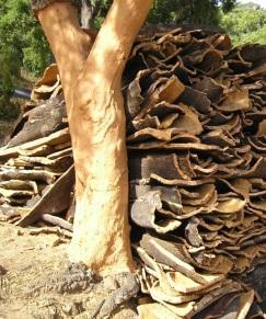 Harvesting cork