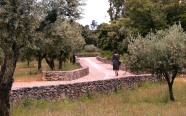 Walking through olive groves